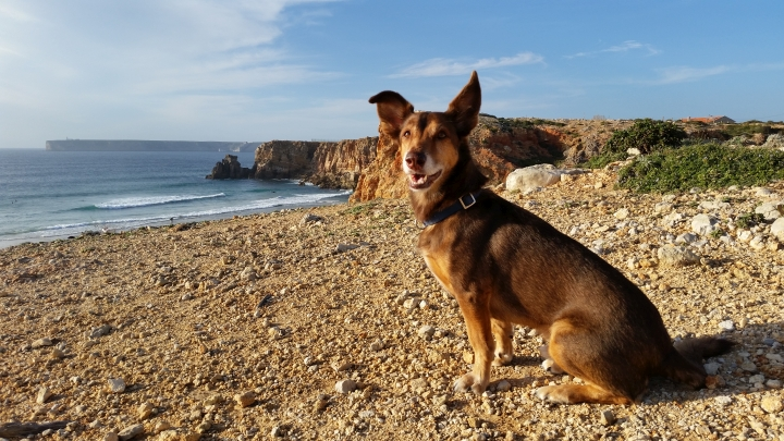 Hund in Sagres