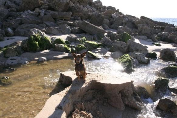 hund auf sandbank