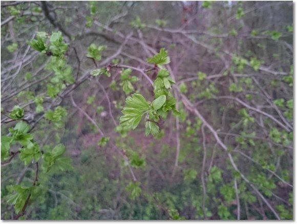 bäume bekommen blätter
