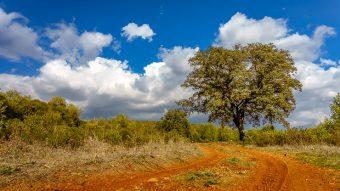 Wolken und Baum