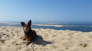 Die Bucht von Arcachon, Dune du Pilat und der längste Sandstrand Europas