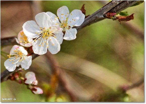 Blüten an Bäumen