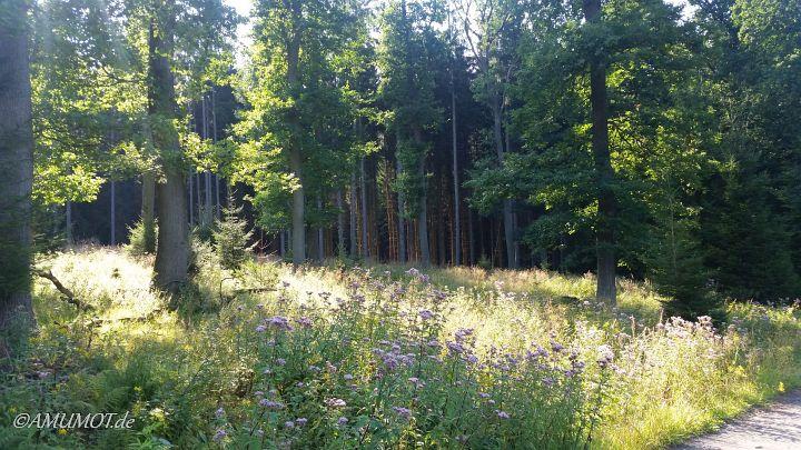 Bei der einstündigen Gassirunde im Wald