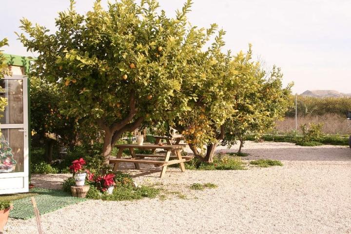 Oragenbaum