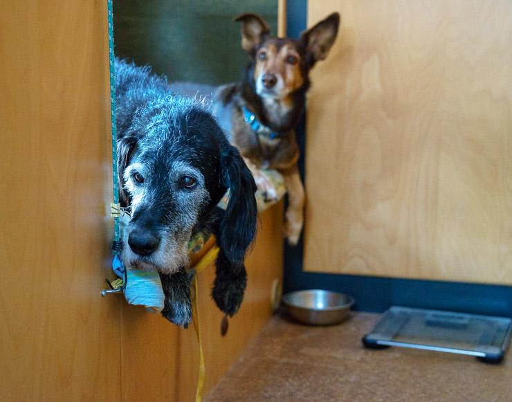 Hunde Max und Tizon