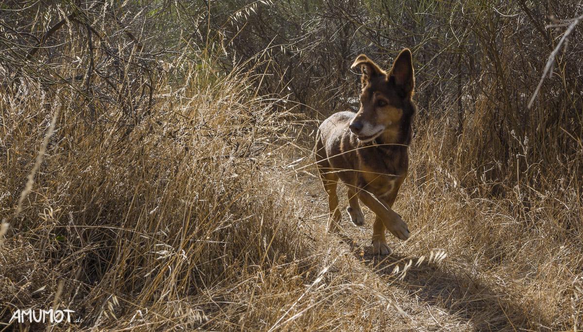 Hunde auf Reisen fotografieren