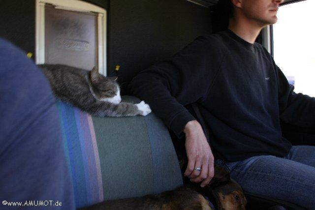 Katze im Womo