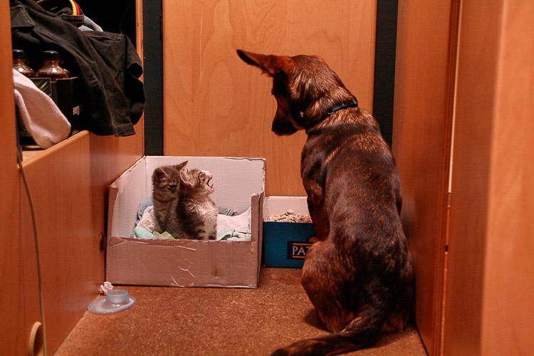 Ob man Katzen mit ins Wohnmobil nehmen kann?