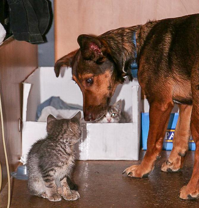 Hund und Katze lernen sich kennen