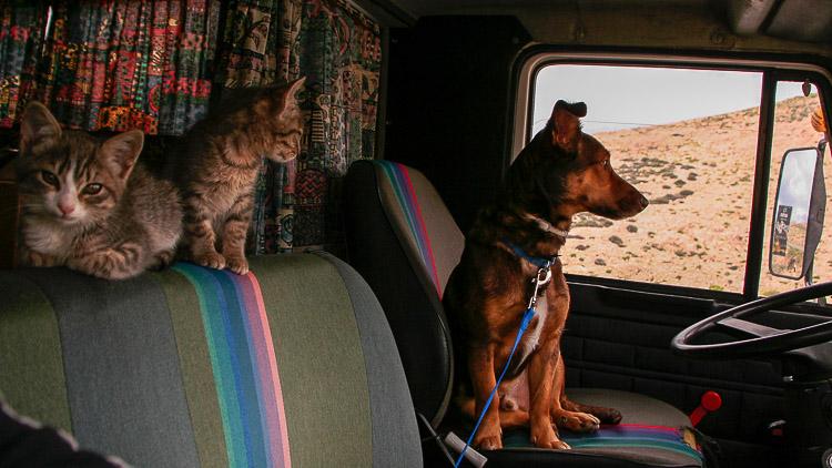 Mit Katzen reisen