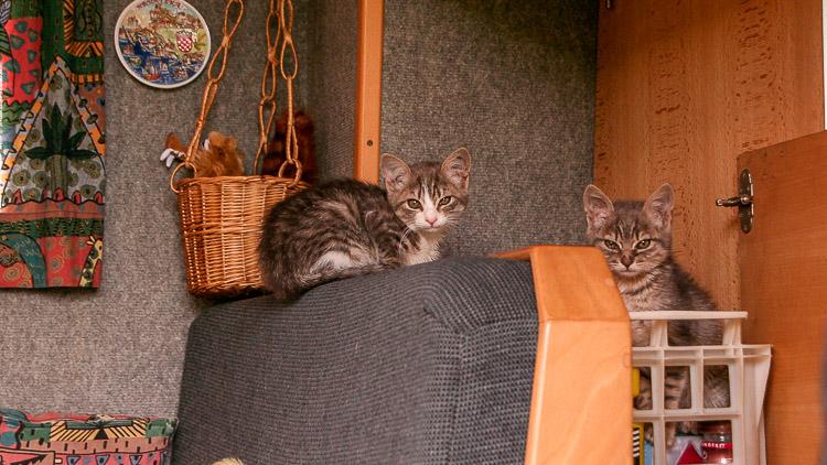 Eine Reise mit Katzen