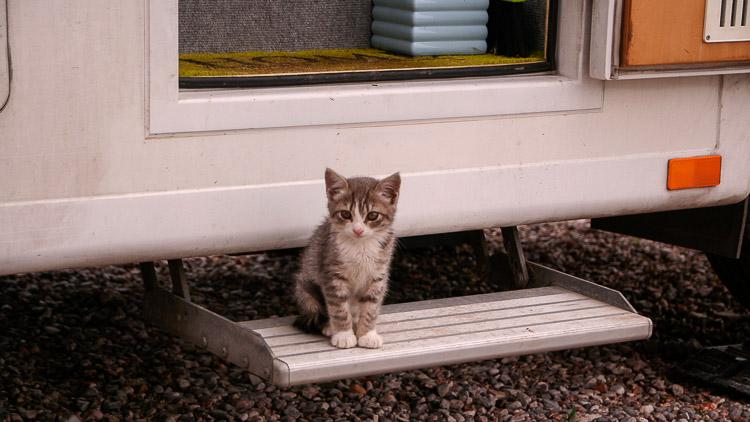 Wohnmobil Katze auf reisen