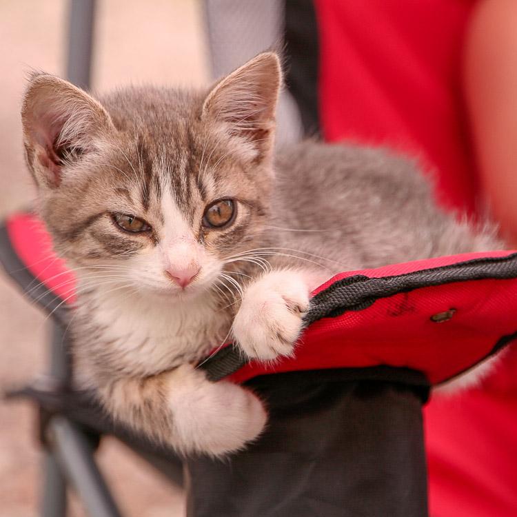 Camping mit Katze