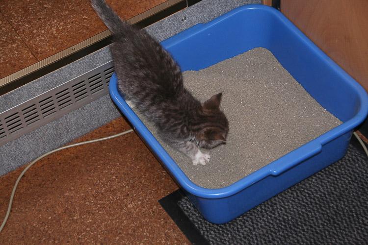 Katzenklo fürs Wohnmobil