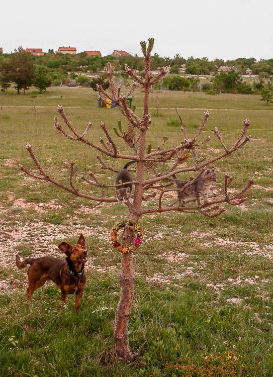 Kratzbaum für Katzen im Wohnmobil