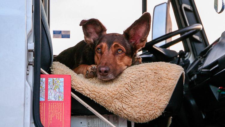 Hund im Wohmmobil
