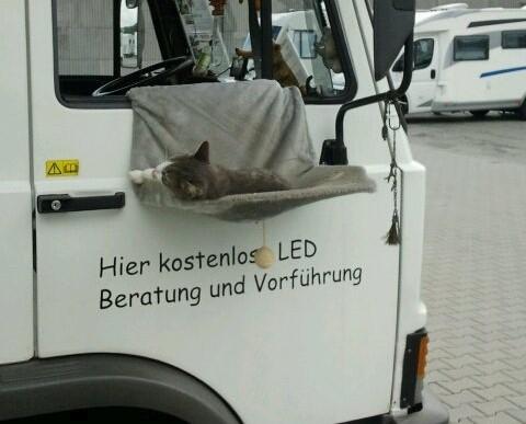 Hängematte für Katze