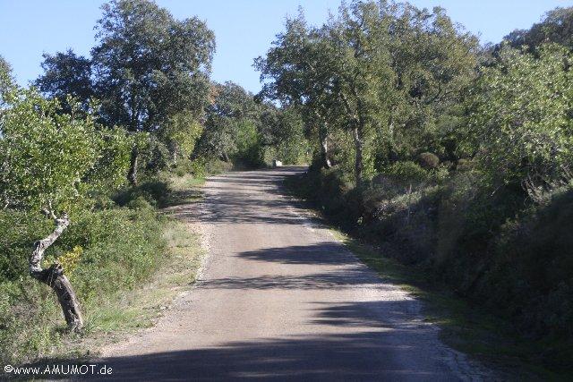 eichenwälder portugal