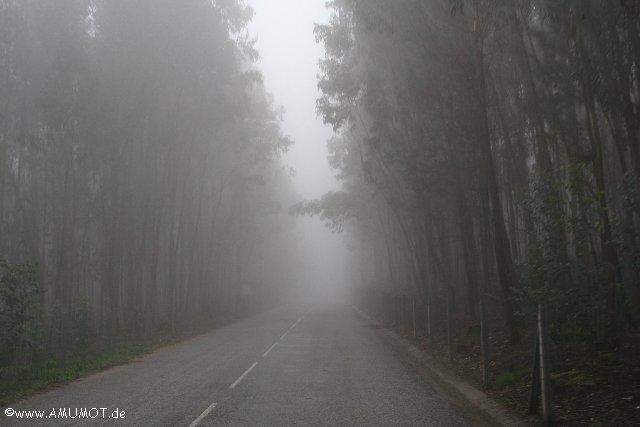 dicker nebel