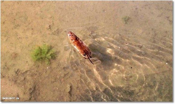 Maus bei Hochwasser