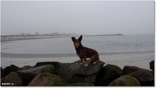Max an der Ostsee