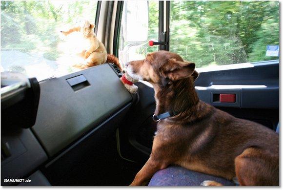 Max schaut zum Fenster raus