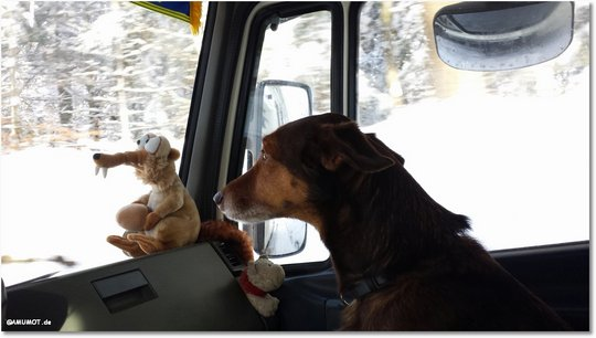 hund beim autofahren