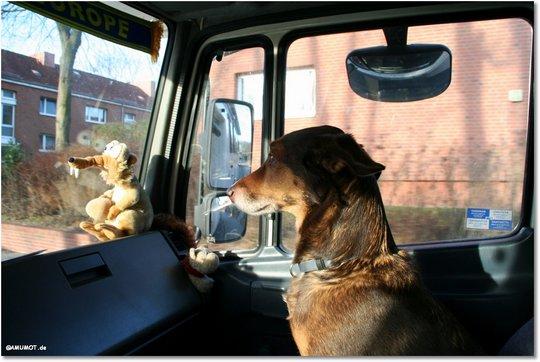 Max ist schon gespannt und schaut ob ich richtig fahre.