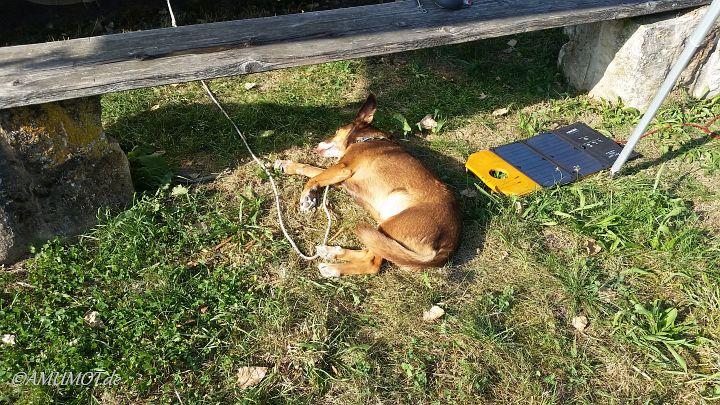 Max genießt das Wetter, selbst bei 33 Grad liegt er in der Sonne und chillt vor sich hin.