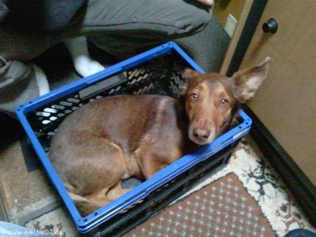 hund in klappbox