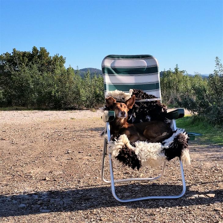 Hund Max auf dem Stuhl