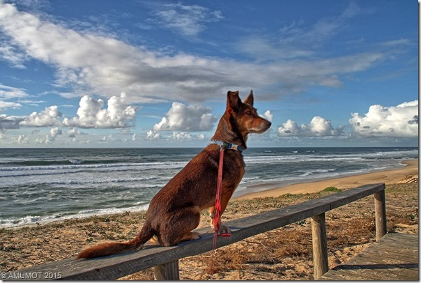 Max am Atlantik
