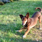 Mit hunden in die Pfalz