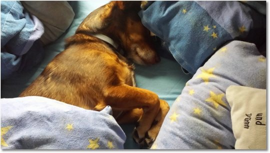 hundebaby krank