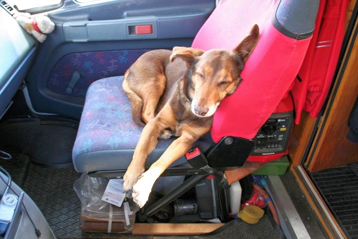 Max genießt die Fahrt