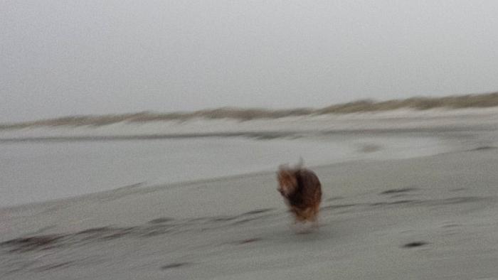Max rennt am Strand