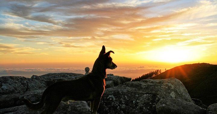 Hund blickt in den Sonnenuntergang