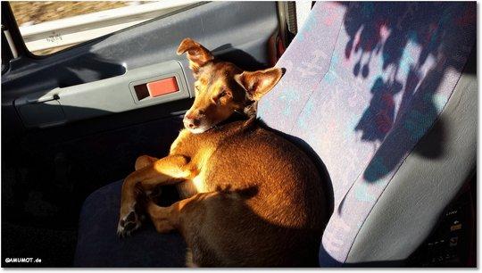 Max chillt in der Sonne