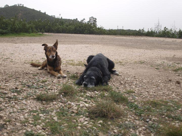 Max und Tizon