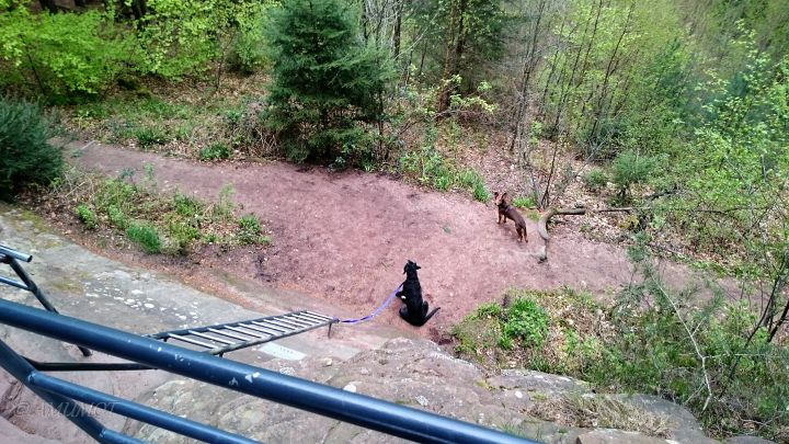 Schön für die Hunde Dahner Felsenland