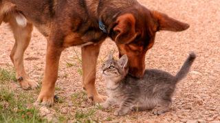 Mit Hund und Katze im Wohnmobil auf Reisen