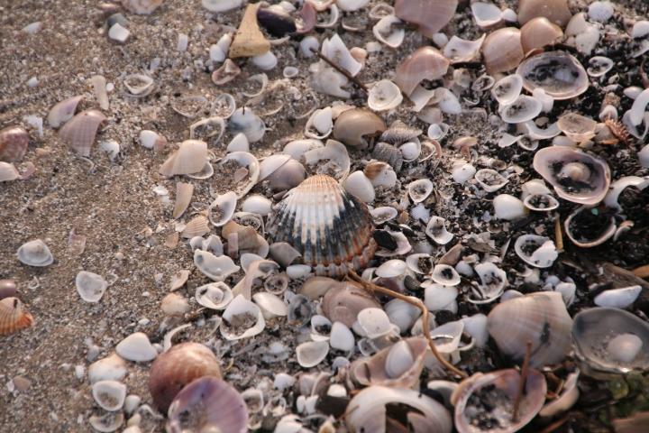 Muscheln am Strand in Denia