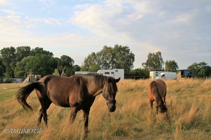 Pferde im Outback