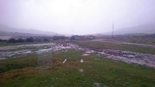 schweineweise bei regen