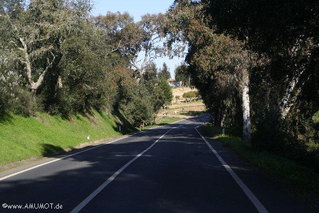 Korkeichenwälder in Portugal