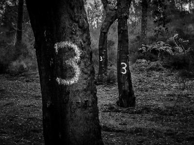 Fotografieren im Wald