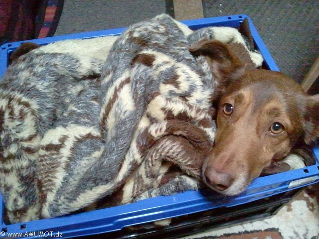 Hundekörbchen