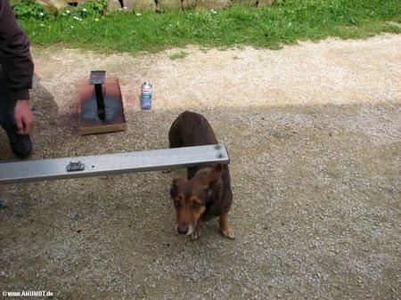 hunde arbeit