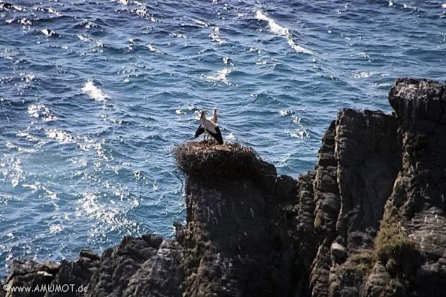 Störche an der Steilküste