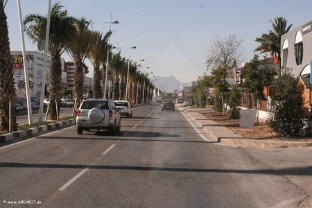 Palmen an der Straße